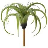 Kunstpflanze Tillandsie ca. 30x26cm - Grün, Basics, Kunststoff (30/26cm)