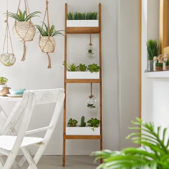 Blumentreppe Chile - Weiß/Akaziefarben, MODERN, Holz/Metall (40,5/177/65cm) - MÖMAX modern living