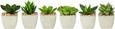 Umetna Rastlina Sukkulente - zelena, Trendi, umetna masa (9/7cm)