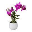 Orchidee Japanorchidee Pink - Pink/Grün, Basics, Kunststoff (40cm)