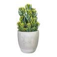 Kunstpflanze Senecio Grün - Grau/Grün, Kunststoff (55cm)
