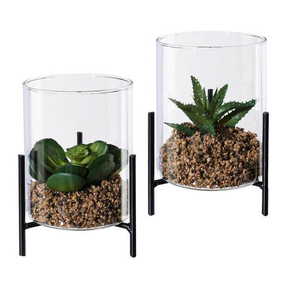 Dekopflanze Sukkulente Versch. Designs - Klar/Schwarz, LIFESTYLE, Glas/Kunststoff (8/5cm)