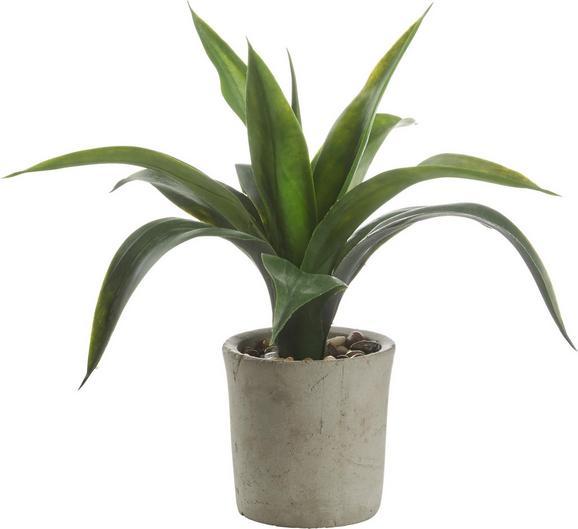 Umetna Rastlina Agave - zelena, Konvencionalno, umetna masa (35 cm cm) - Mömax modern living