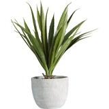Kunstpflanze Agave Grün - Grün, KONVENTIONELL, Kunststoff (38 cmcm) - Mömax modern living