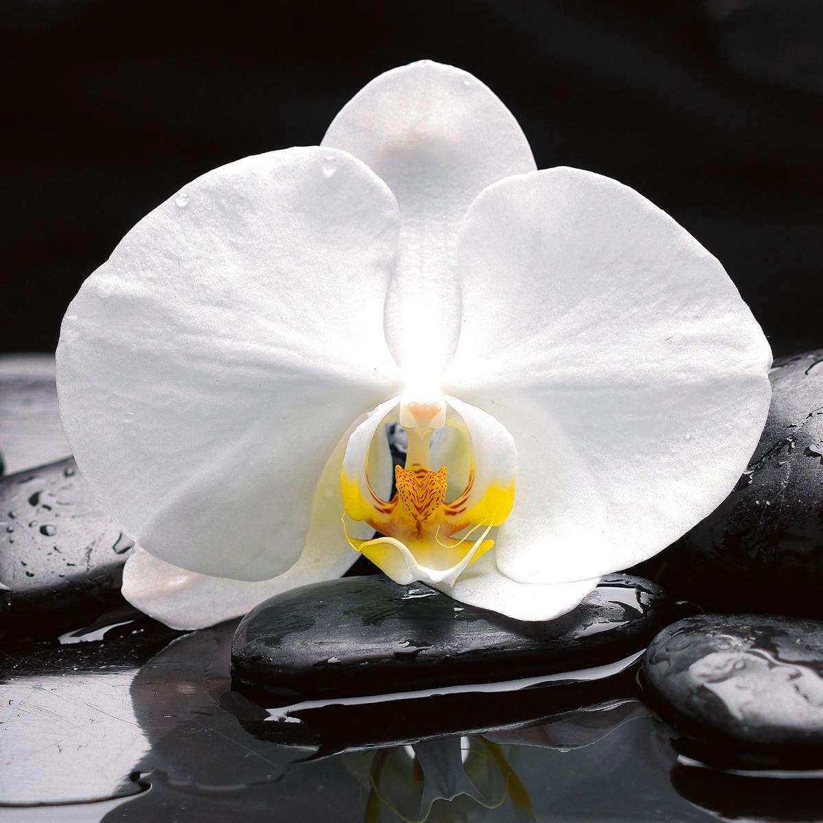 Üvegkép White Balance - multicolor, modern, üveg (30/30/2cm) - MÖMAX modern living
