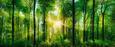 Glasbild Green Sunshine, ca. 50x125x2cm - Grün, Glas (50/125/2cm)