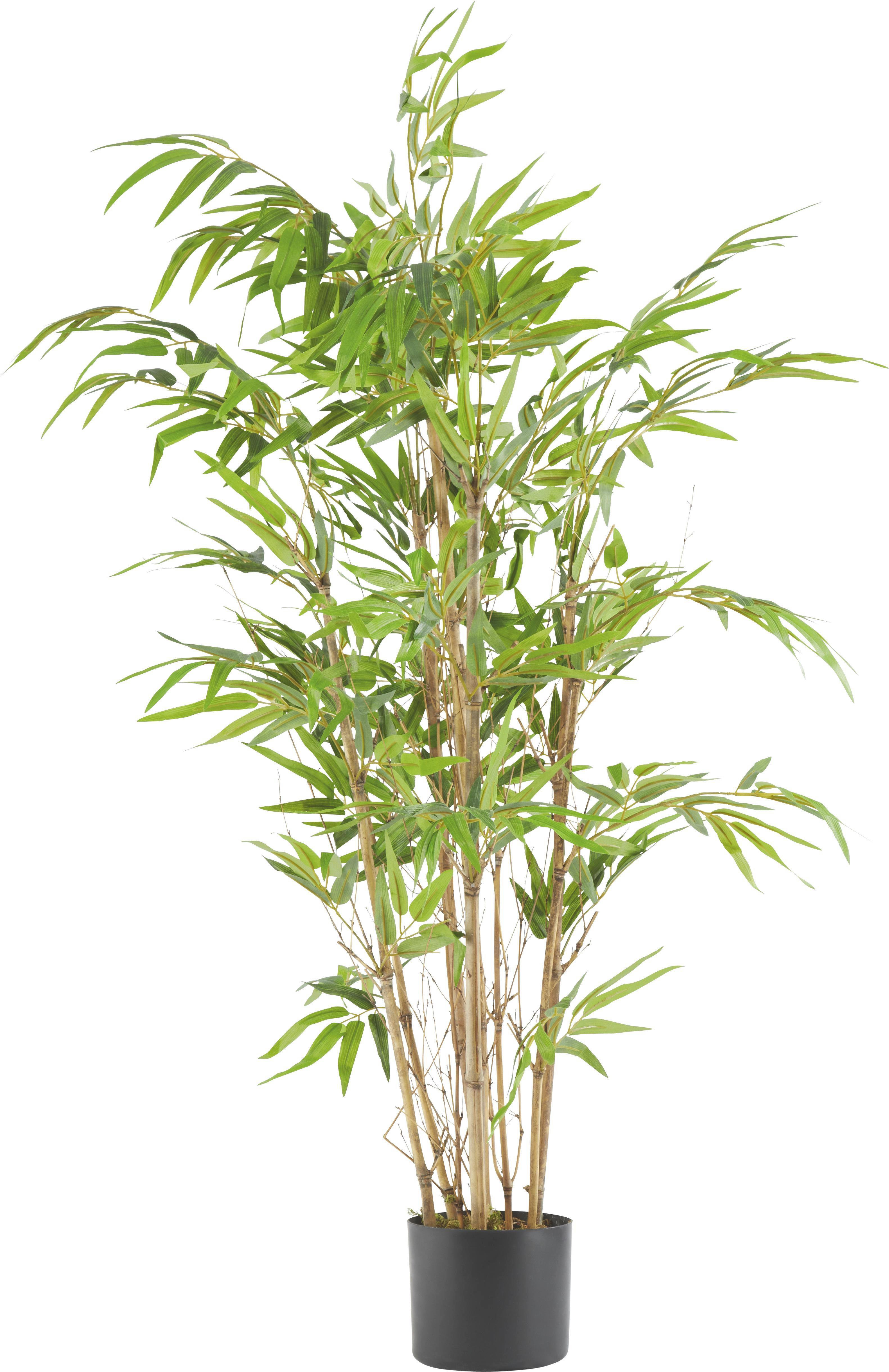 Kunstpflanze Noah in Grün online kaufen ➤ mömax