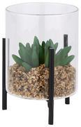 Dekopflanze Sukkulente Versch. Designs - Klar/Schwarz, LIFESTYLE, Glas/Kunststoff (8,5/13,5cm)