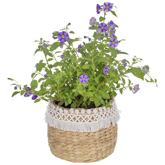 Vas Ornamental Pentru Ghiveci Jimmy - alb/culoare natur, lemn (16/16cm) - Zandiara